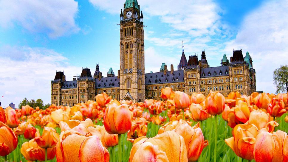 Tulip festival tour Ottawa